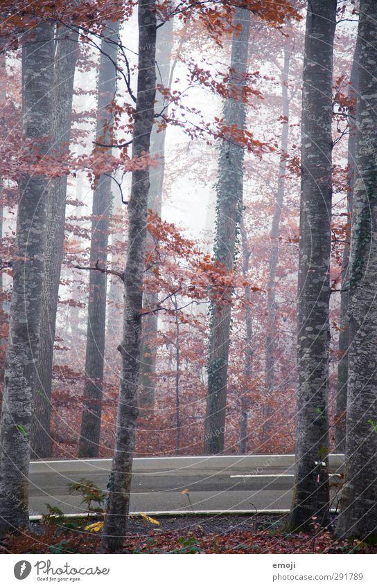 herzlichherbstlich Umwelt Natur Herbst Klima schlechtes Wetter Nebel Baum Wald kalt natürlich Farbfoto Außenaufnahme Menschenleer Tag Schwache Tiefenschärfe