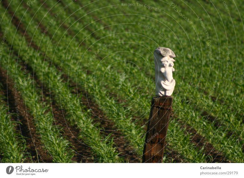 Grins Wiese grün obskur Mais Skluptur grinsen