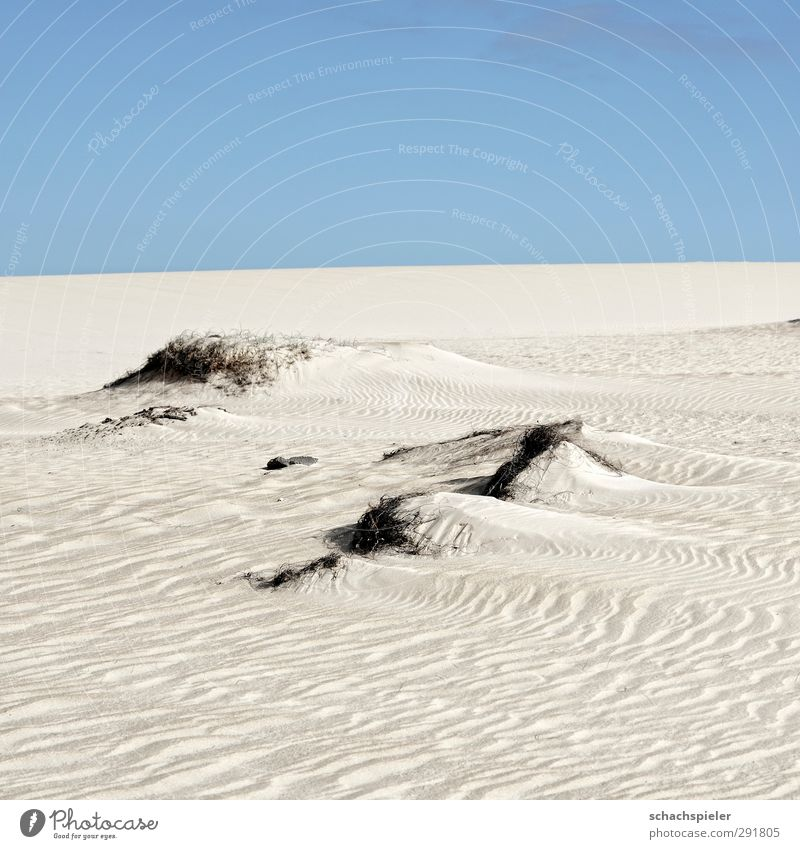 Nix als Sand Umwelt Natur Landschaft Urelemente Erde Himmel Schönes Wetter Dürre Insel Fuerteventura Wüste Düne blau Abenteuer Angst Einsamkeit Endzeitstimmung