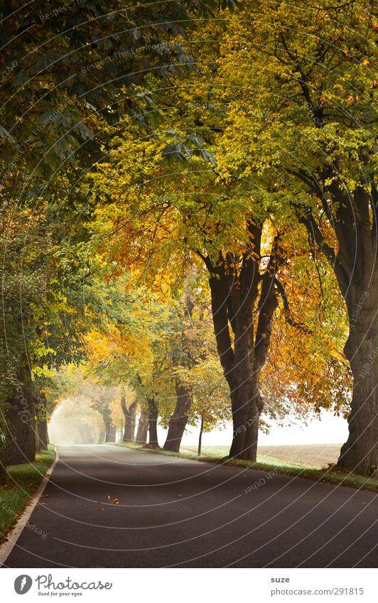 Weg ins Licht Natur Pflanze Baum Landschaft Umwelt Straße Wege & Pfade Wetter Klima Nebel authentisch Verkehr Ziel Asphalt Verkehrswege herbstlich