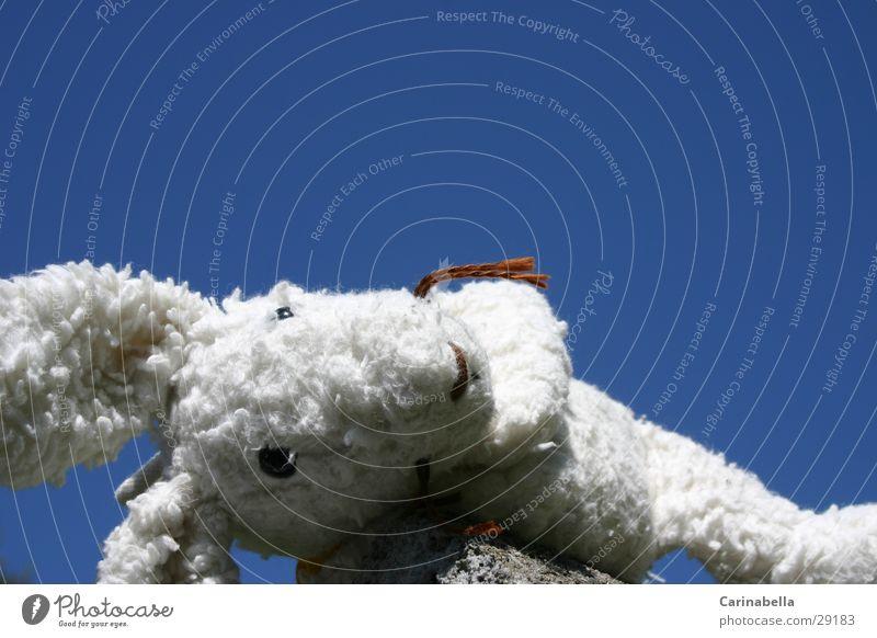 Verlorener Hase Tier Spielzeug Hase & Kaninchen obskur Osterhase Stofftiere