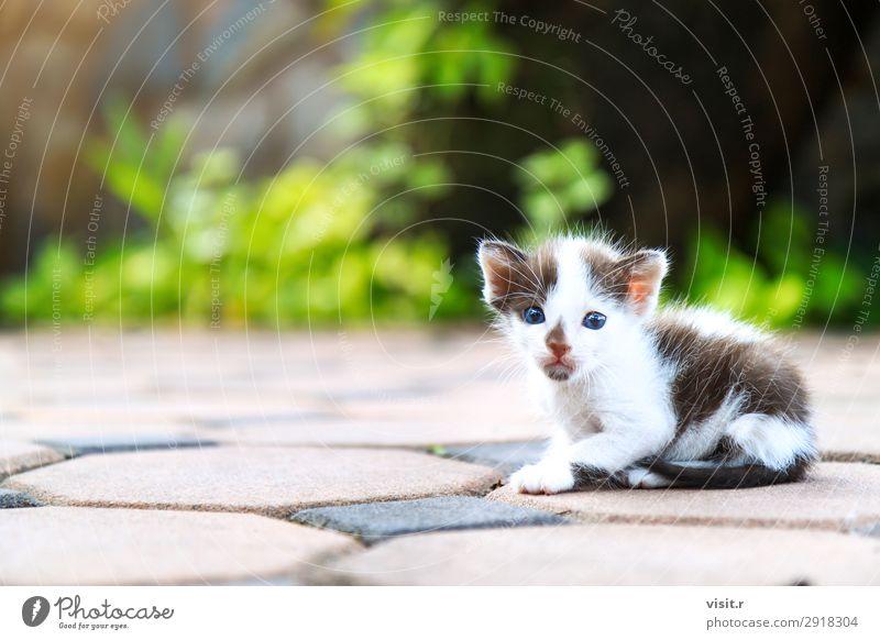 Streunendes Kätzchen sitzt und schaut auf die Kamera. Haus Garten Natur Tier Haustier Katze Pfote 1 Liebe sitzen Armut dreckig klein lustig niedlich braun grün