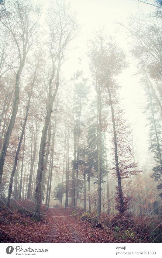tall Umwelt Natur Landschaft Herbst schlechtes Wetter Nebel Baum Wald bedrohlich kalt natürlich Farbfoto Außenaufnahme Menschenleer Tag Schwache Tiefenschärfe