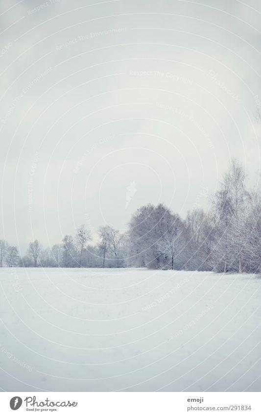 ### Umwelt Landschaft Himmel Winter Schnee Sträucher hell kalt weiß Farbfoto Gedeckte Farben Außenaufnahme Menschenleer Textfreiraum oben Textfreiraum unten