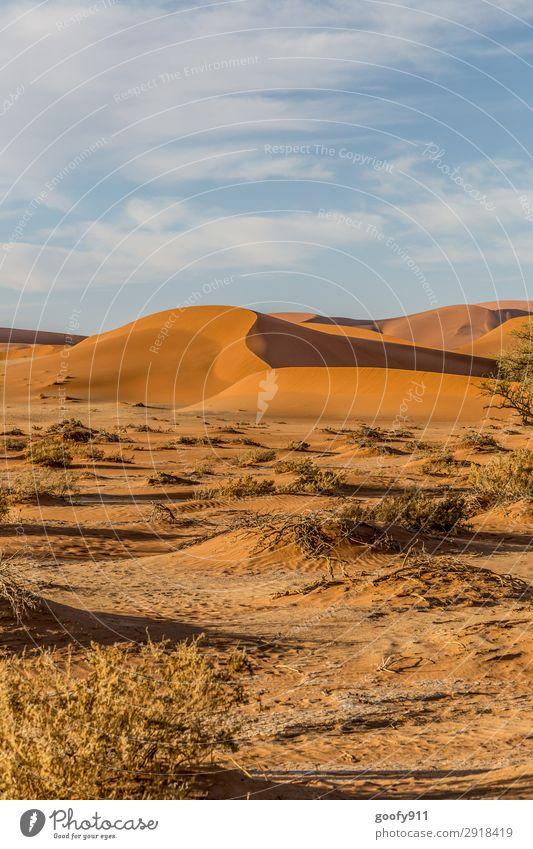 Wüste Namib / Namibia Himmel Ferien & Urlaub & Reisen Natur Sommer Pflanze Landschaft Tier Einsamkeit Ferne Umwelt Frühling Tourismus Freiheit Sand Ausflug