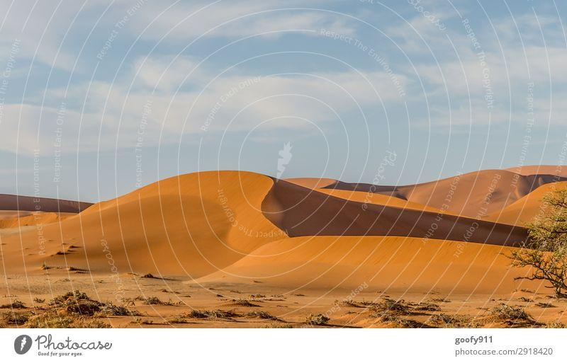 Namibia's Wüste Himmel Ferien & Urlaub & Reisen Natur Pflanze Landschaft Wolken Tier Ferne Wärme Umwelt Tourismus Freiheit Sand Ausflug Horizont Erde