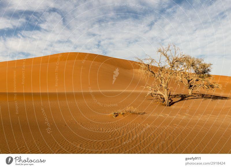 Karge Namib Wüste Himmel Ferien & Urlaub & Reisen Natur Pflanze Landschaft Baum Tier Ferne Wärme Umwelt Tourismus außergewöhnlich Freiheit Sand Ausflug Erde