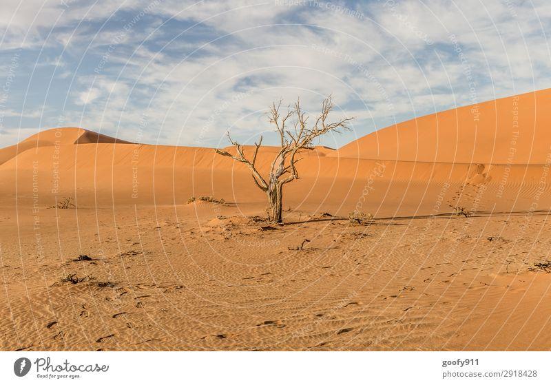 Toter Baum Ferien & Urlaub & Reisen Tourismus Ausflug Abenteuer Ferne Freiheit Safari Expedition Umwelt Natur Landschaft Pflanze Tier Erde Sand Himmel
