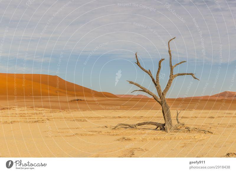 Kein Leben mehr!!! Himmel Ferien & Urlaub & Reisen Natur Pflanze schön Landschaft Baum Tier Ferne Wärme Umwelt Tourismus Freiheit Sand Ausflug Erde