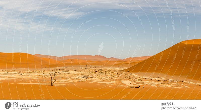 Das andere Death Vlei Himmel Ferien & Urlaub & Reisen Natur Pflanze Landschaft Baum Tier Ferne Wärme Umwelt Tourismus außergewöhnlich Freiheit Sand Ausflug