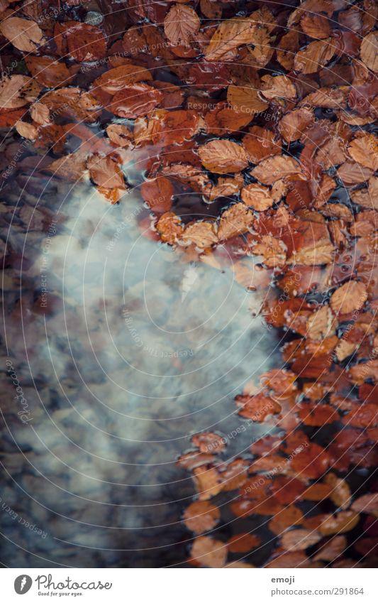 wish Natur Wasser Blatt Umwelt Herbst natürlich nass Teich