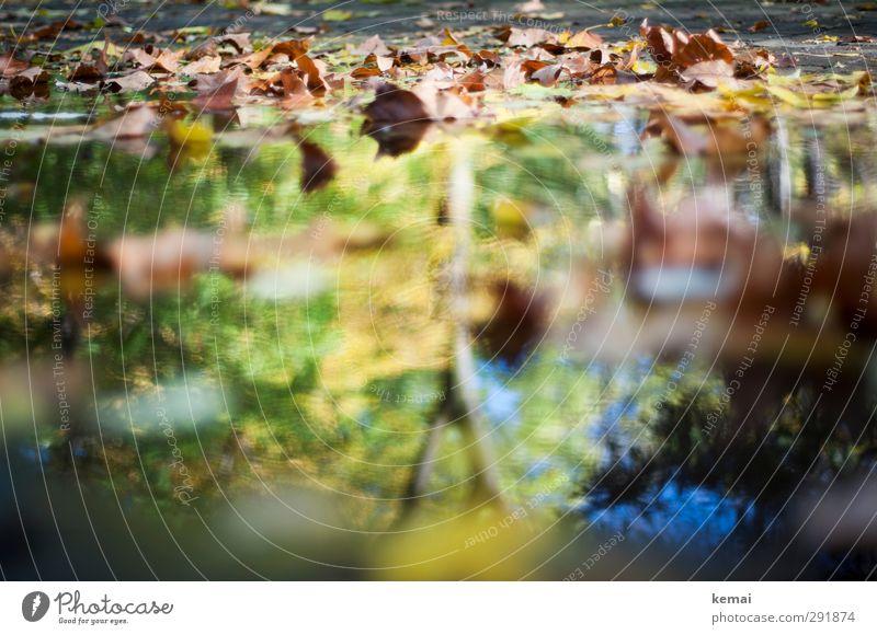 Rückblick in den Herbst Umwelt Natur Pflanze Wasser Sonnenlicht Schönes Wetter Baum Blatt Garten Park Pfütze nass gelb grün herbstlich Herbstlaub Farbfoto