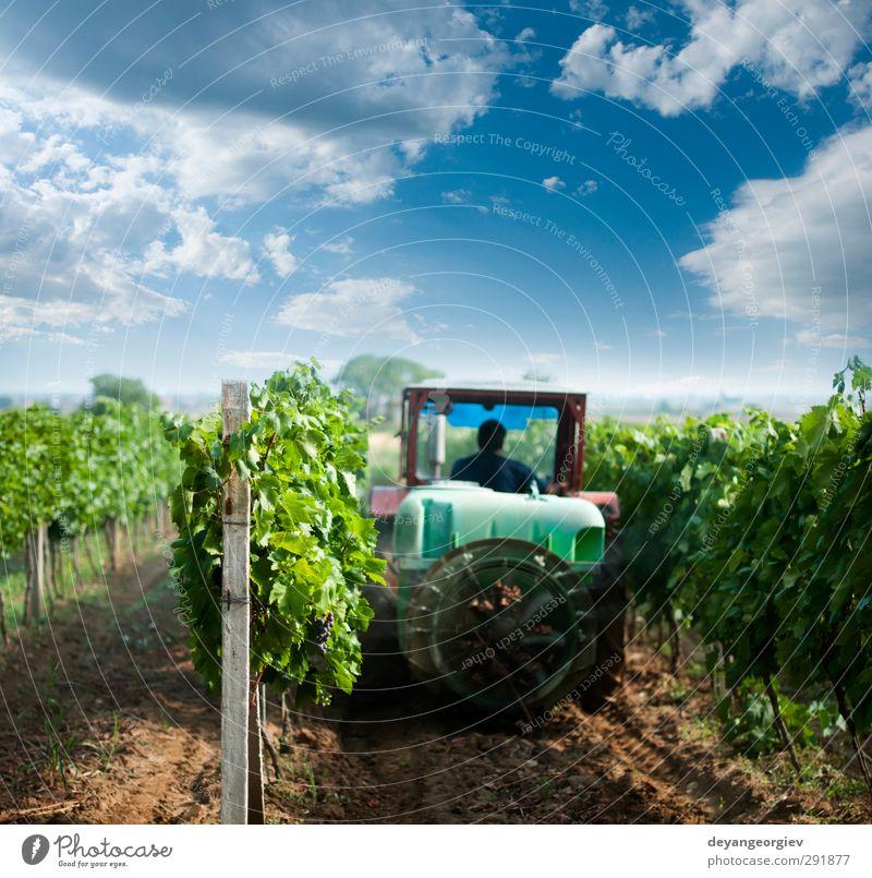 Himmel Natur grün Landschaft Gras Arbeit & Erwerbstätigkeit Wachstum Jahreszeiten Wein Bauernhof Ernte Ackerbau Landwirtschaft ländlich Maschine Gift