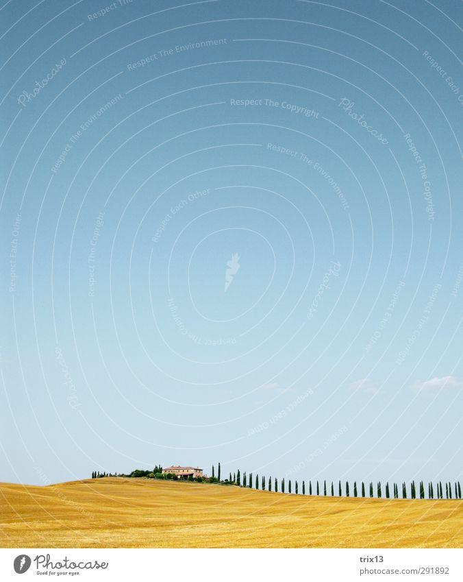 Val d'Orcia - Toskana Ferien & Urlaub & Reisen Ausflug Ferne Sommer Sommerurlaub Natur Landschaft Himmel Baum blau gelb Zypresse Farbfoto Außenaufnahme