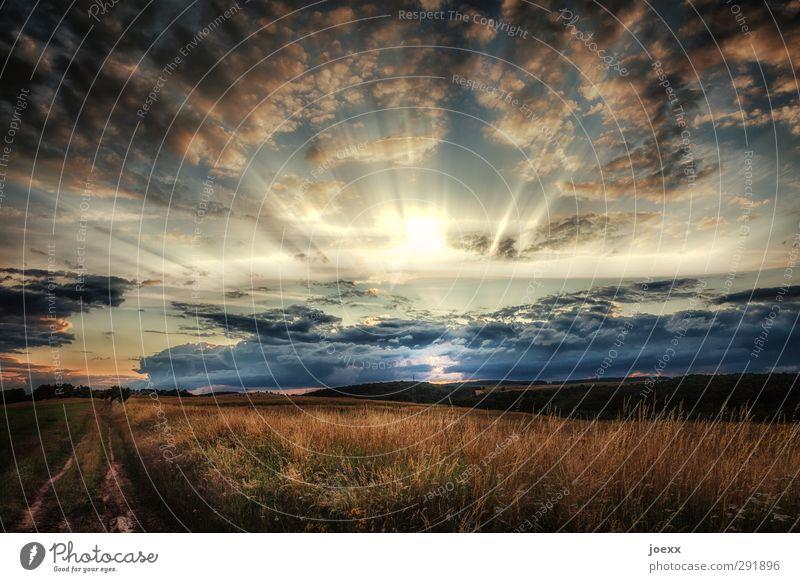 Es geht weiter Landschaft Pflanze Himmel Wolken Horizont Sonnenaufgang Sonnenuntergang Sonnenlicht Sommer Schönes Wetter Wiese Feld schön blau grau schwarz weiß