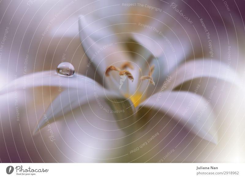 Sanftes romantisches künstlerisches Bild, weicher Pastellhintergrund verschwommen. Lifestyle elegant Stil Design Kunst Kunstwerk Umwelt Natur Pflanze Blume