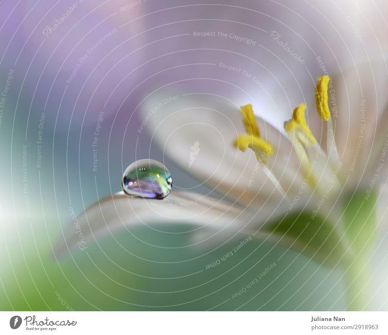 Natur Pflanze schön grün Wasser weiß Blume ruhig Freude Gesundheit Lifestyle Umwelt natürlich Feste & Feiern Stil Kunst