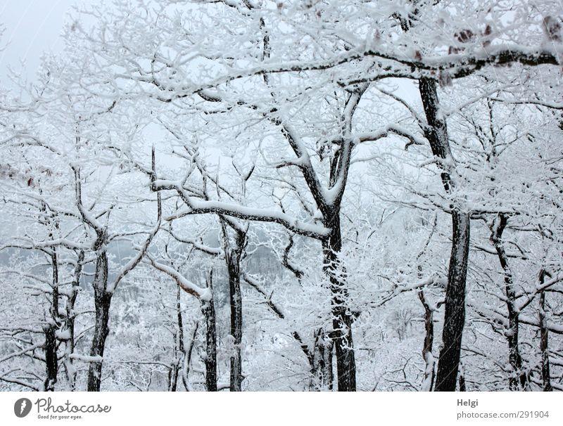 schneebedeckt... Natur schön weiß Pflanze Baum Einsamkeit Winter ruhig Landschaft schwarz Wald Umwelt Berge u. Gebirge kalt Schnee grau