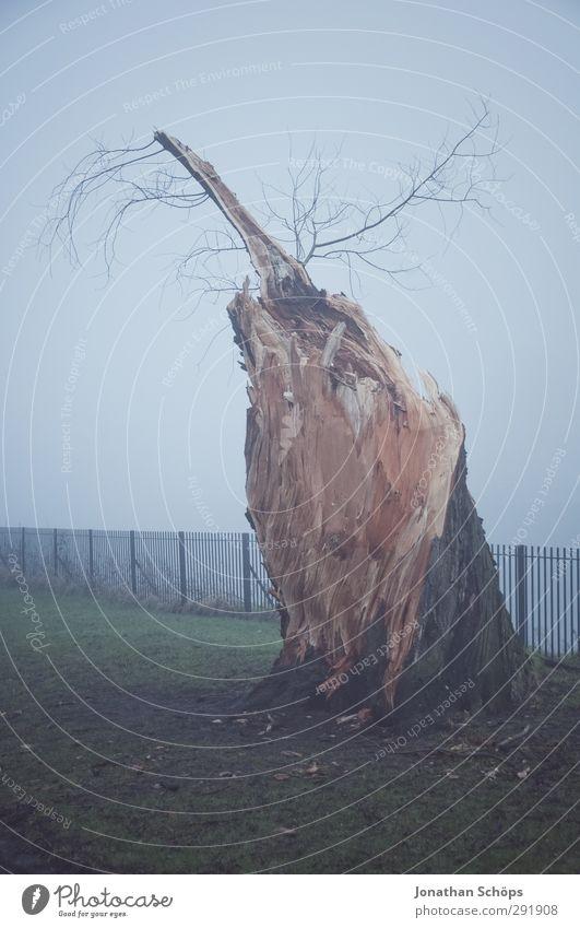 Baumrest im Nebel Natur Einsamkeit Winter ruhig Umwelt dunkel Wiese kalt Herbst Tod Traurigkeit Park Wachstum trist