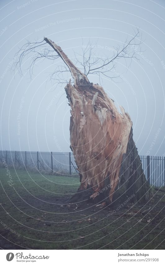 Baumrest im Nebel Umwelt Natur Herbst Winter Park Wiese Glasgow Großbritannien Schottland ruhig Traurigkeit Einsamkeit Baumstumpf Blitzschlag Tod Totholz