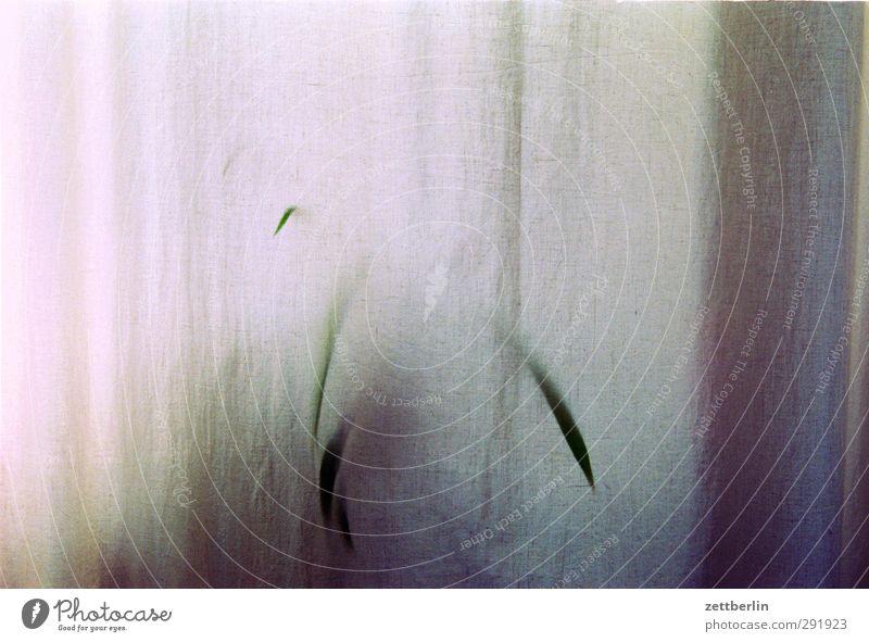 Alte Pflanze Zimmerpflanze Topfpflanze Raum Innenarchitektur Wohnung Häusliches Leben Gardine Vorhang Fenster durchsichtig Transzendenz Schemata Schaum