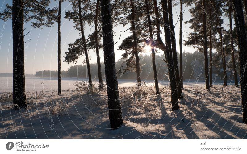 Waldrand Natur blau Ferien & Urlaub & Reisen weiß Baum Sonne Winter Landschaft schwarz Erholung Wald Umwelt kalt Schnee Eis Feld