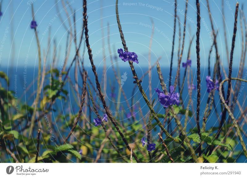 nothing to hide Himmel Natur blau Wasser Pflanze Sommer Meer Tier Wärme Horizont Schönes Wetter Unendlichkeit violett nah Urwald exotisch