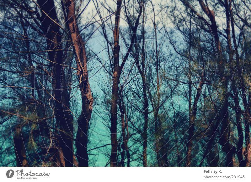 tropical disorder Natur Pflanze Wasser Horizont Sommer Schönes Wetter Wärme Baum Sträucher Küste exotisch viele blau braun türkis Klima Farbfoto Außenaufnahme
