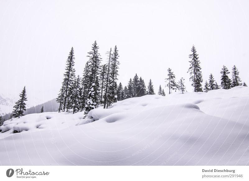 -10 Grad Natur Landschaft Pflanze Tier Winter Eis Frost Schnee Schneefall Baum Wald Hügel Alpen Berge u. Gebirge blau schwarz weiß Dolomiten Winterurlaub
