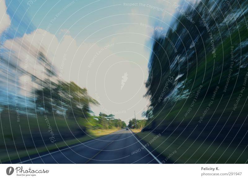 Hawaiian rush Natur Landschaft Sommer Schönes Wetter Baum Gras Sträucher Wald Urwald Autofahren Straße Geschwindigkeit Stress Farbfoto Außenaufnahme Sonnenlicht