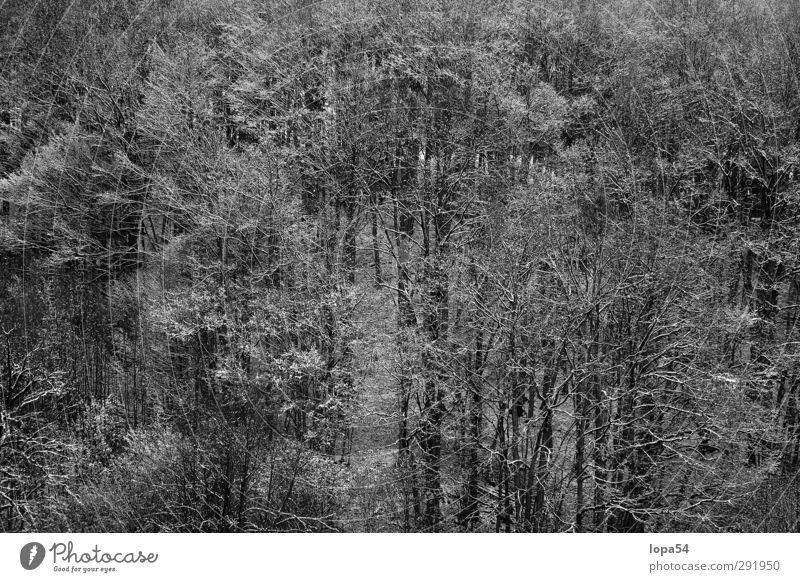 Winterwald Schnee Umwelt Natur Landschaft Eis Frost Wald dunkel kalt schwarz weiß schön ruhig Klima Baum Bäume Schwarzweißfoto Außenaufnahme Muster