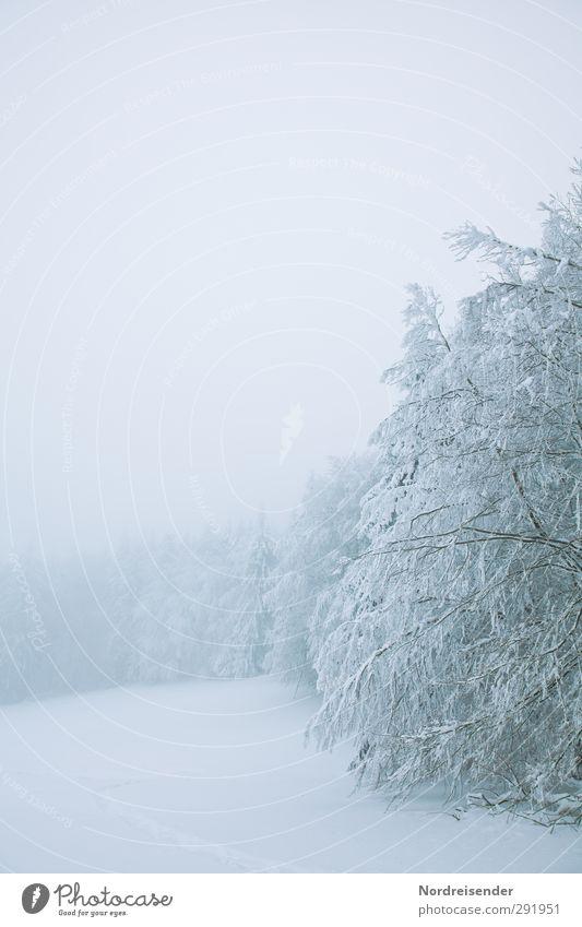 Starre Winter Schnee Winterurlaub Natur Landschaft Klima Wetter schlechtes Wetter Nebel Eis Frost Baum Wiese Wald kalt weiß ruhig rein stagnierend