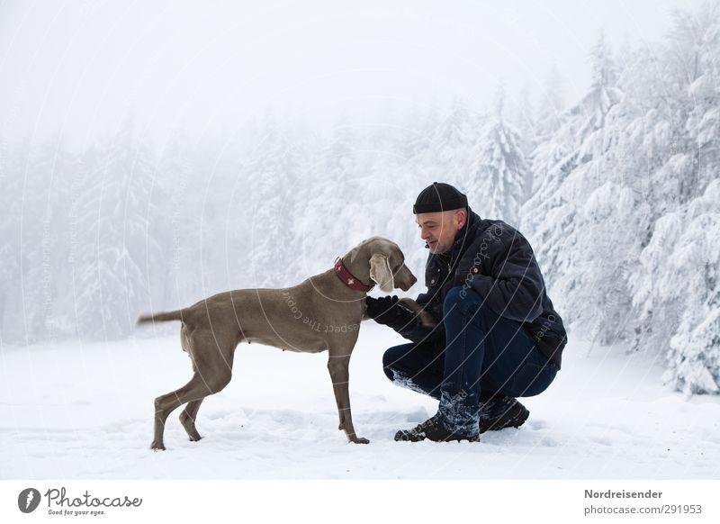 Mann und Weimaraner Jagdhund spielen in einem Winterwald Lifestyle Fitness Leben harmonisch Sinnesorgane Schnee wandern Mensch Erwachsene Freundschaft Klima