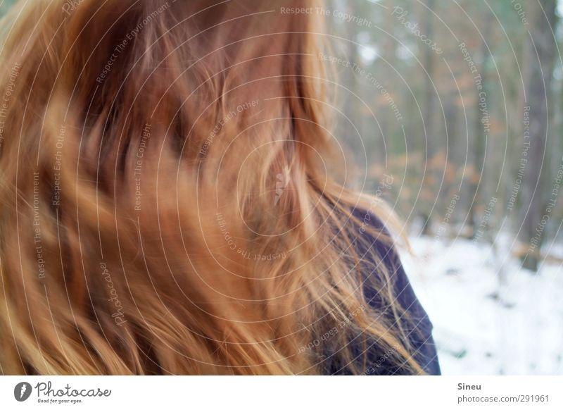 Vom Winde verwackelt Mensch Frau Natur Baum rot Winter Erholung Wald Erwachsene kalt Schnee Leben feminin Bewegung Haare & Frisuren Eis