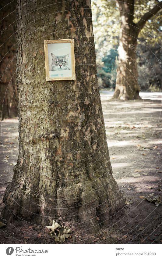 Da haut´s de Mietz an' Boom! Katze Natur Baum Umwelt lustig außergewöhnlich braun Park gold Kreativität trocken Bild Tiergesicht Baumstamm hängen tierisch