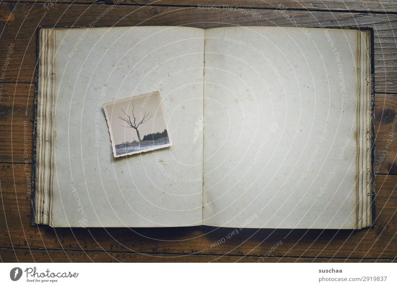 fotoalbum Natur alt Landschaft Baum Gefühle Textfreiraum Kindheit leer Buch Vergänglichkeit Fotografie Vergangenheit Trauer Sehnsucht Erinnerung analog