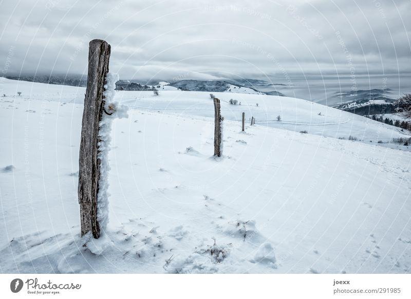 Grenzpfosten Natur Landschaft Wolken Horizont Winter Wetter Wind Eis Frost Schnee Berge u. Gebirge kalt blau schwarz weiß Idylle Schauinsland Farbfoto