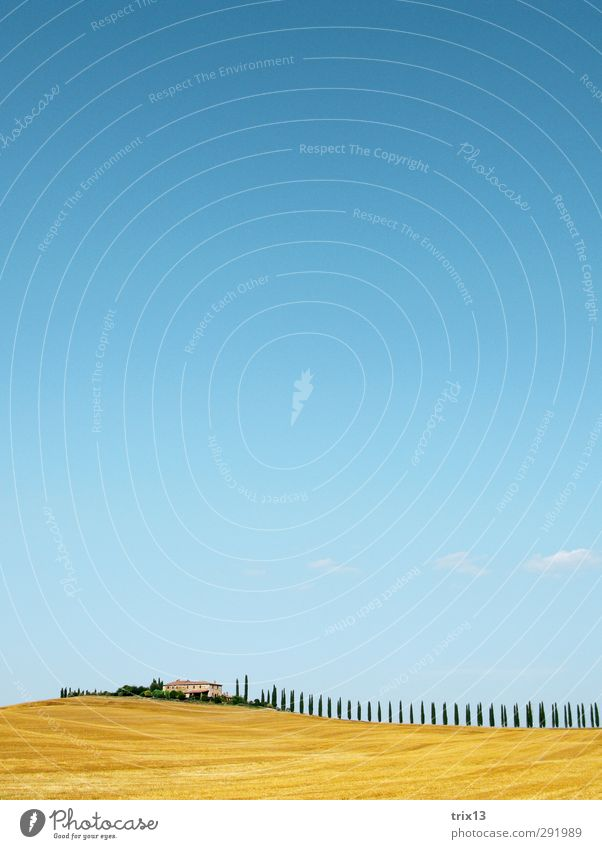 Val d'Orcia zum 2. Ferien & Urlaub & Reisen Ferne Sommer Sommerurlaub Natur Landschaft Himmel Baum Zypresse Feld Hügel blau gelb Toskana Val d'orcia Farbfoto