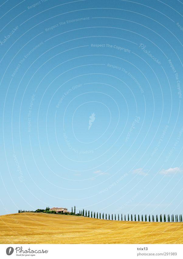 Val d'Orcia zum 2. Himmel Natur blau Ferien & Urlaub & Reisen Sommer Baum Landschaft gelb Ferne Feld Hügel Sommerurlaub Toskana Zypresse