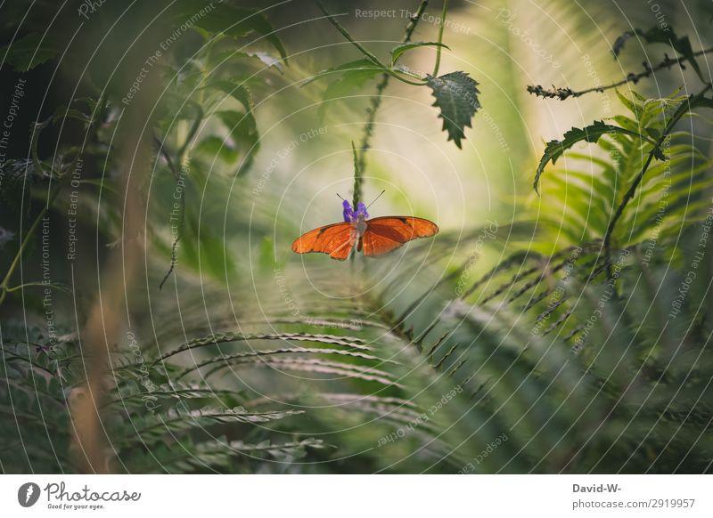 Dschungelfeeling Kunst Kunstwerk Gemälde Umwelt Natur Landschaft Pflanze Tier Sonne Sonnenlicht Frühling Sommer Klima Klimawandel Wetter Schönes Wetter Farn