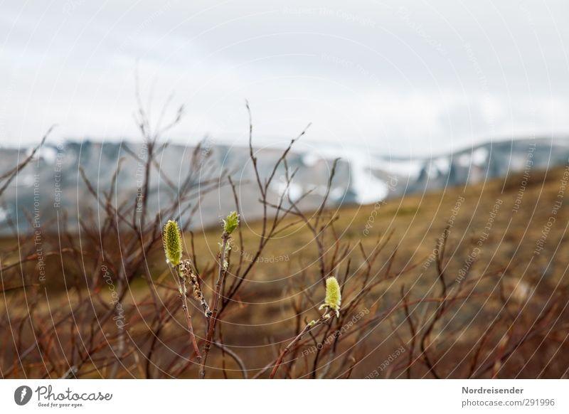 Bergfrühling Leben Sinnesorgane ruhig Duft Berge u. Gebirge wandern Natur Landschaft Pflanze Frühling Klima Wetter Regen Wildpflanze Wiese Blühend Wachstum