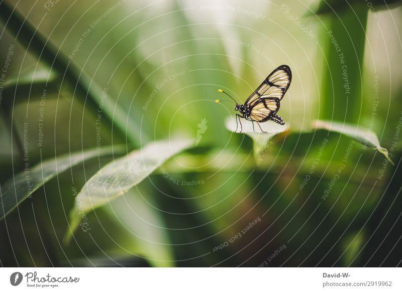 Engelsgleich Kunst Kunstwerk Gemälde Umwelt Natur Frühling Sommer Klima Klimawandel Schönes Wetter Tier Nutztier Schmetterling Flügel 1 Gleichgewicht schön