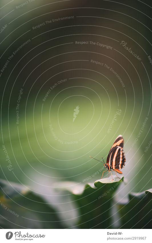 da sitzt er Kunst Kunstwerk Gemälde Umwelt Natur Landschaft Tier Luft Sonne Frühling Sommer Pflanze Blatt Grünpflanze Garten Park Wald Schmetterling Flügel 1
