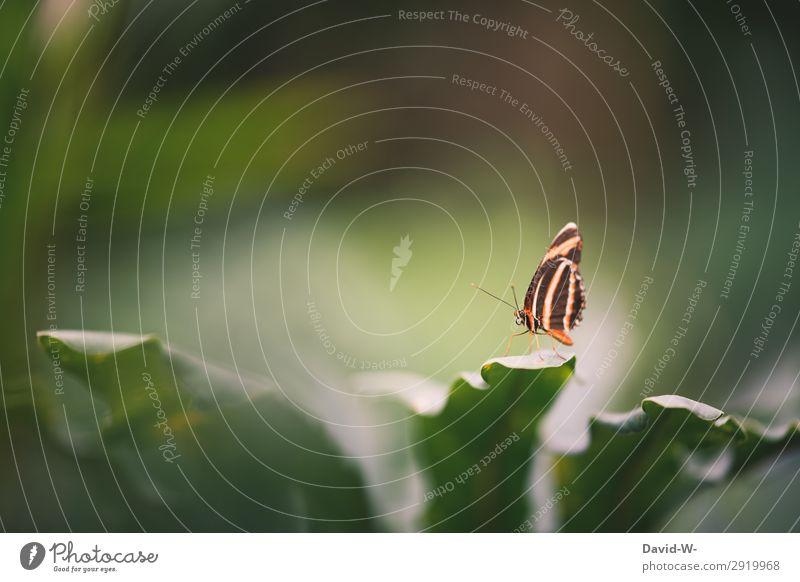 sommerlich Kunst Ausstellung Kunstwerk Gemälde Umwelt Natur Landschaft Sonne Frühling Sommer Klima Wetter Schönes Wetter Pflanze Grünpflanze Garten Park Tier