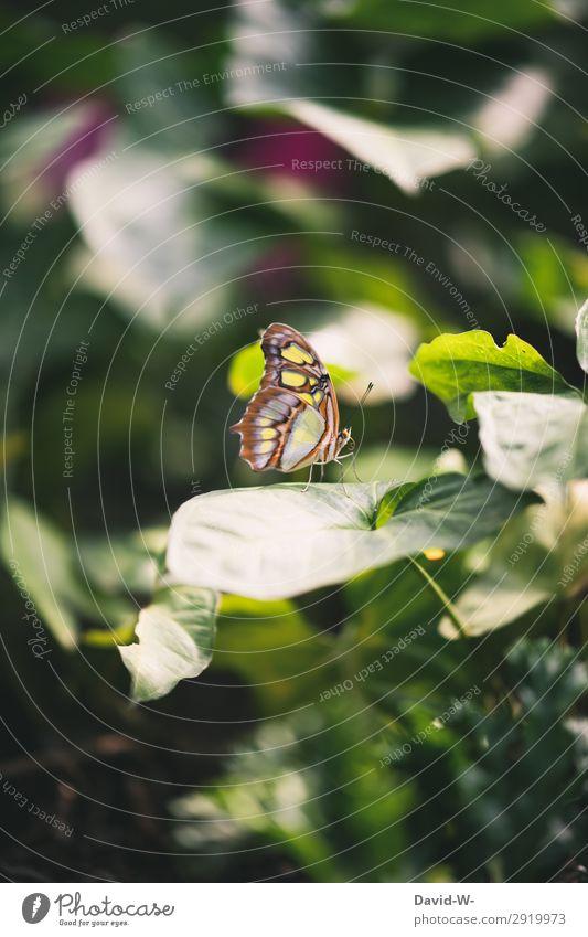 Sonnenplätzchen Kunst Kunstwerk Gemälde Umwelt Natur Landschaft Pflanze Sonnenlicht Frühling Sommer Klima Schönes Wetter Blatt Tier Schmetterling Flügel 1