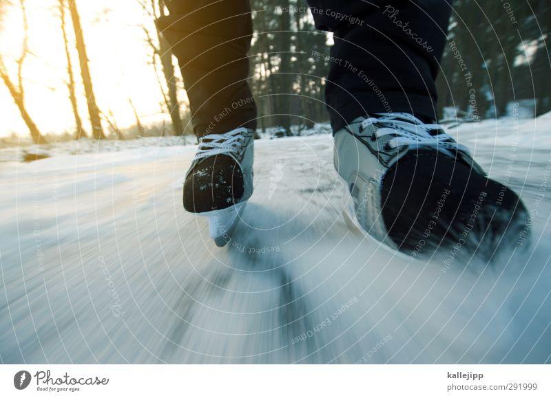 projekt seerosenteich Mensch 1 Umwelt Natur Landschaft Winter Eis Frost Schnee Seeufer Schlittschuhlaufen Schlittschuhe Kufe gleiten Freizeit & Hobby