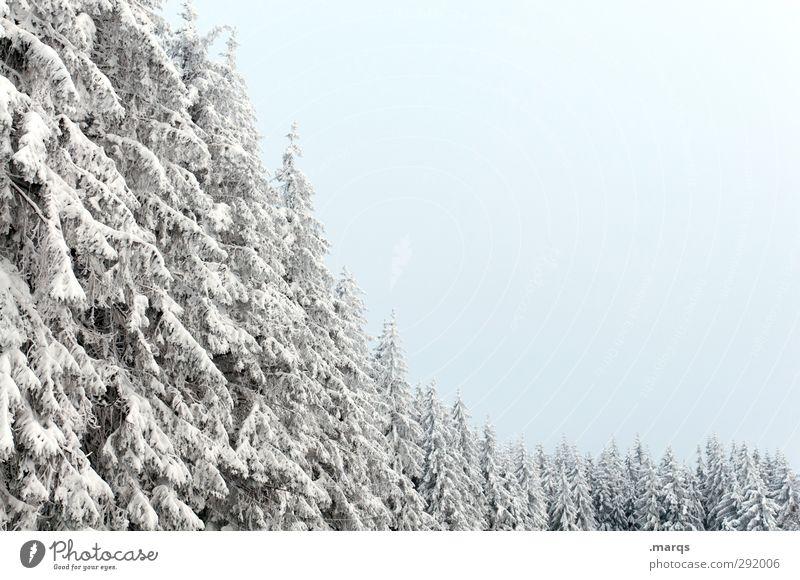 Reihenweise Ferien & Urlaub & Reisen Ausflug Winterurlaub Umwelt Natur Landschaft Klima Eis Frost Schnee Baum Nadelbaum Baumreihe Wiese kalt Ordnung Perspektive