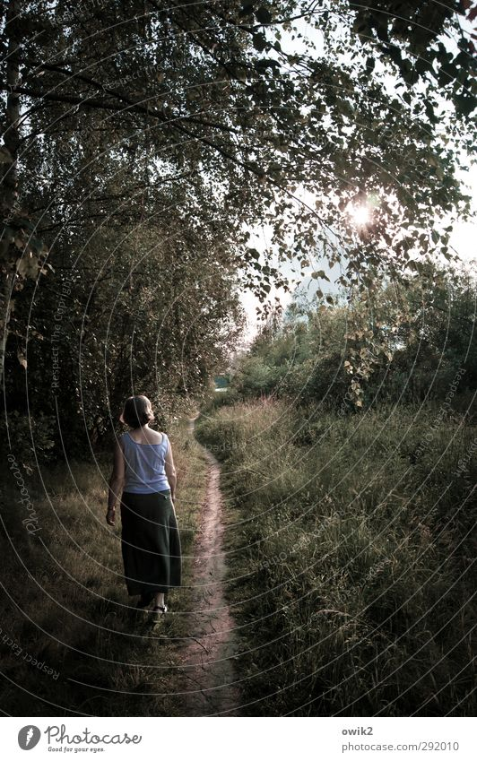 Naturlehrpfad Mensch feminin Frau Erwachsene 1 Umwelt Landschaft Pflanze Frühling Klima Wetter Schönes Wetter Baum Gras Blatt Grünpflanze Park Wege & Pfade