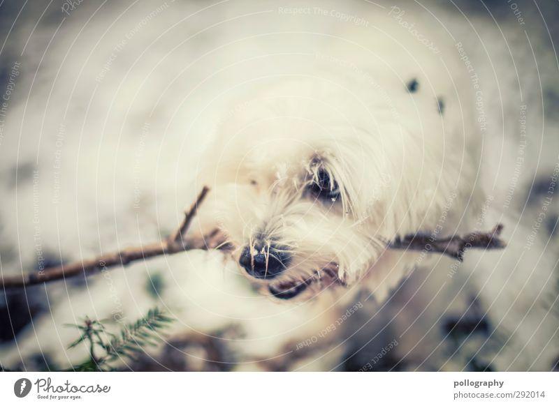 MEINS! Hund Natur weiß Pflanze Tier Blatt Winter Wald Schnee Essen Schönes Wetter Ast Haustier Wachsamkeit Stock Aggression