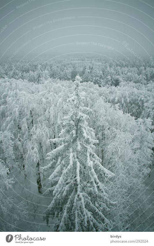 Im Tiefflug... Natur schön Winter ruhig Wald kalt Schnee oben Eis Wetter Klima Nebel hoch Idylle Frost Frieden